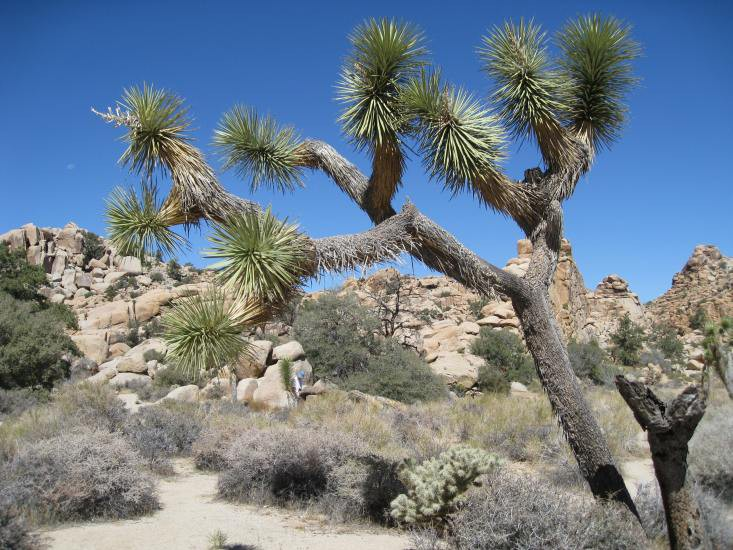 Californien, Joshua Tree National Park